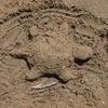 海の砂カメ