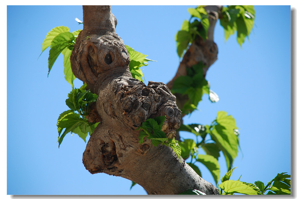 Spain植物特写
