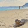 伊良湖の海、カップル2組