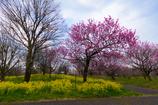 富山県中央植物園3