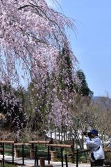 桜の季節ってなんかいいですね。