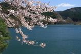 ダム湖畔の春