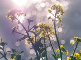 多摩川の小春日和の岸辺