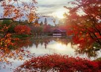 昭和記念公園・紅葉の日本庭園の夕景