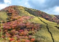 箱根外輪山(明神ヶ岳)の笹原と紅葉