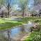 昭和記念公園の春