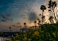 OLYMPUS E-M5MarkIIで撮影した(早春の逢魔が時の海辺)の写真(画像)