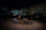 高台寺 夜の彩