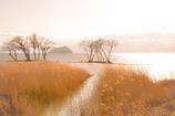 湖北の初春