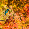 秋の訪れ4