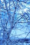 樹氷 その2