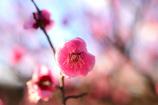 春は近し⑤