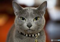 SONY ILCE-7M2で撮影した(猫ですが何か?)の写真(画像)