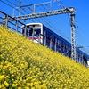 菜の花電車