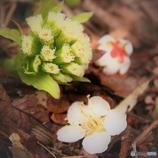 春のコラボ 其の二 (^^♪