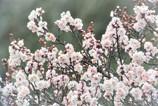 初春や・・