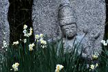 水仙と石仏(2)