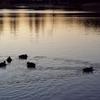 水鳥の池3