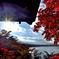 紅葉と富士山と太陽