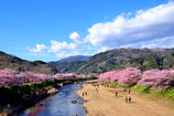 河津の風景