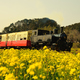 黄色い絨毯トロッコ列車