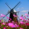 風車と秋桜