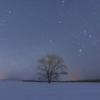 星空とハルニレの木。