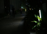 SONY DSLR-A900で撮影した(め)の写真(画像)