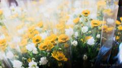 菊の花束の束