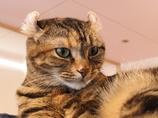 猫カフェ3#7