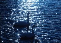 OLYMPUS E-M1で撮影した(光をあびて)の写真(画像)