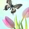Tulip & butterfly