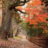 秋薫る小道