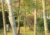 CANON Canon EOS Kiss X5で撮影した(竹と紅葉)の写真(画像)