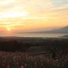 朝の白木峰とコスモス