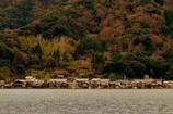 伊根の舟屋群