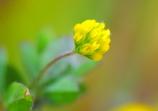 超極小の春♡