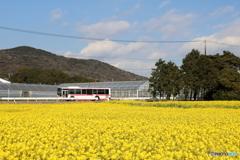 菜の花畑とバスと青空