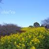 吾妻山公園-282