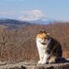 吾妻山公園-253