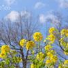 吾妻山公園-261