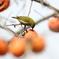 161204-21柿を食べるメジロ
