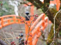 春のつぼみ