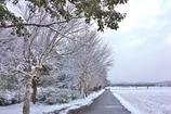 久しぶりに雪が降りました