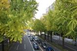 銀杏のある道路
