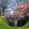 旧線跡の桜