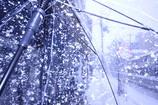 傘を片手に雪散歩