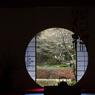 春を覗く-Ⅱ