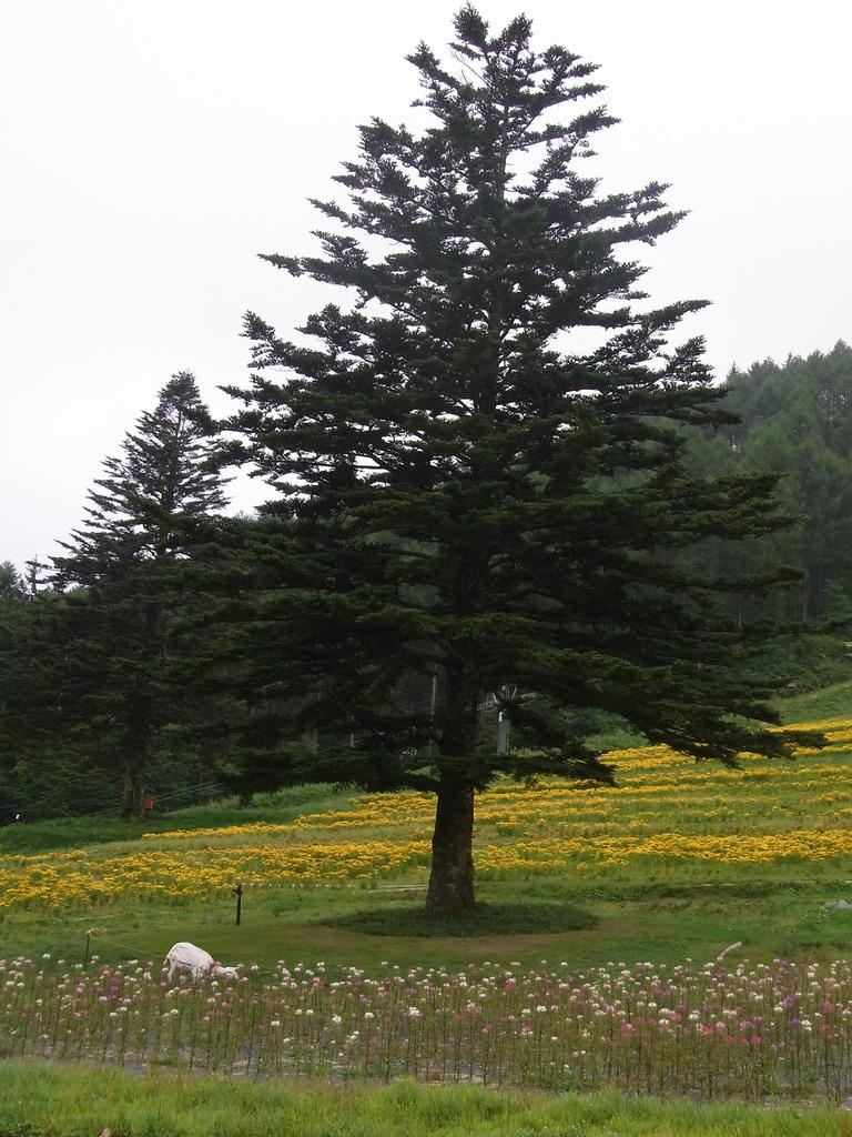 木とひろこ