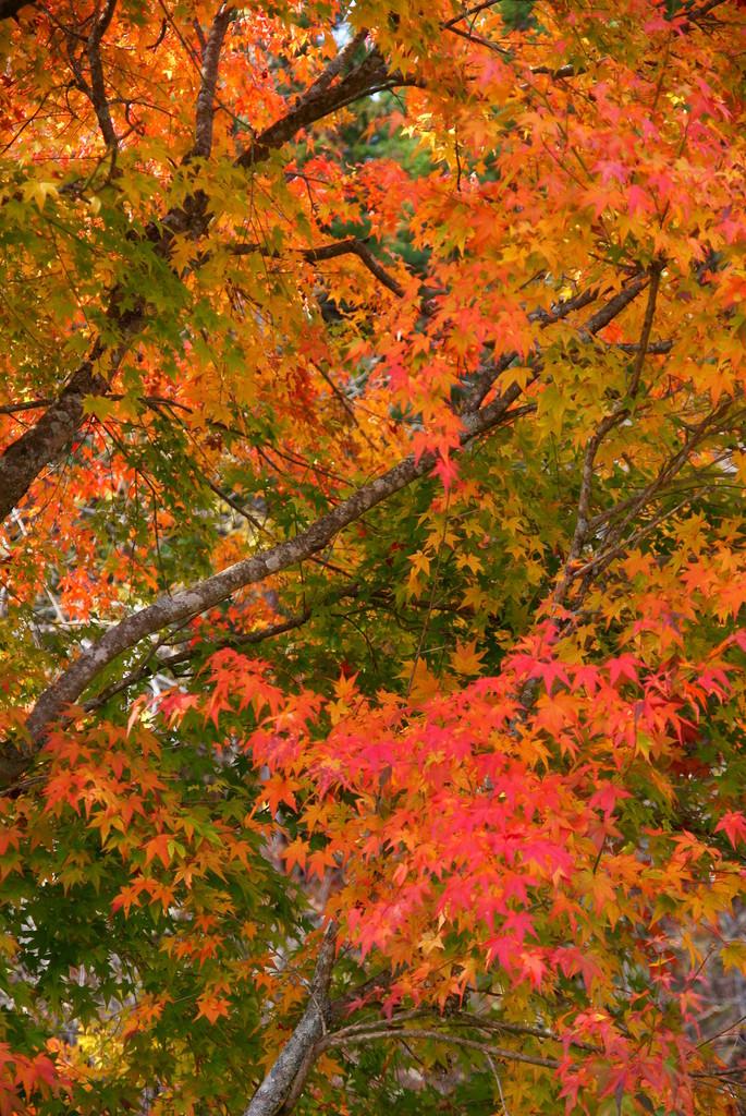 紅葉が始まりました。
